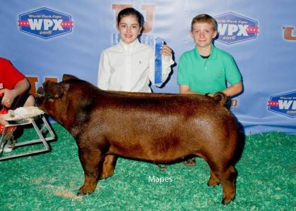 2016 Duroc Class Winner Junior Show