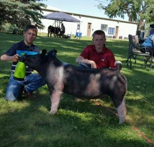2016 Reserve Grand Champion Basin Show