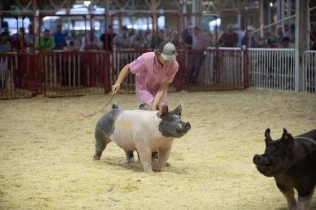 High Selling Crossbred Gilt 2018 World Pork Expo