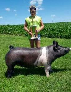 2016 Grand Champion Breeding Gilt, Clinton County Fair