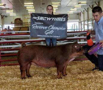 Champion Duroc & Reserve Grand Breeding Gilt
