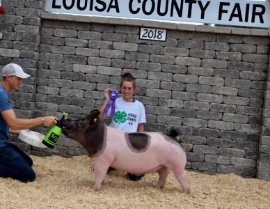 Champ Medium Wt Barrow Louisa Co Fair