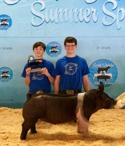 Champion Hampshire Barrow SD Summer Spotlight