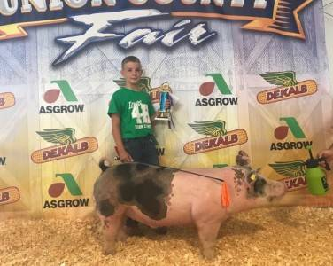 Champion Purchased Market Hog Union Co Fair