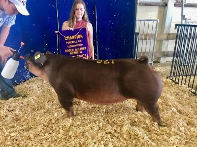 Champion Purebred Gilt Henry Co