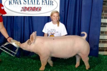 2016 Class Champion Crossbred Barrow
