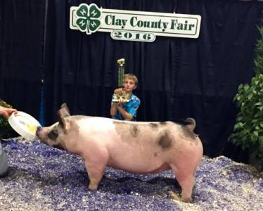 Clay Co Fair