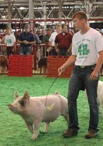 2016 Reserve Champion Division 1 Breeding Gilt