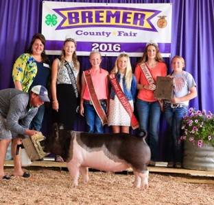 2016 Grand Overall Market Hog, Bremer County Fair
