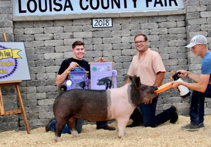 Grand Champ Market Gilt Louisa Co Fair