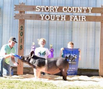 Grand Champion Barrow Story County Fair