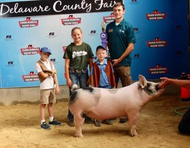 Grand Champion Derby Barrow Delaware Co Fair