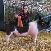 Grand Champion Market Hog Benton Co OR
