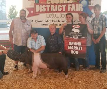 Grand Champion Overall Market Hog Hancock Co Fair