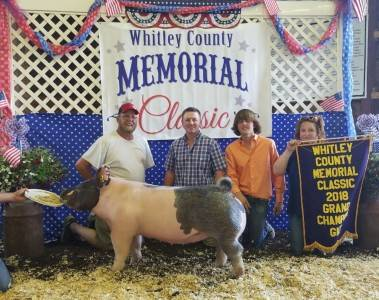 Grand Overall Breeding Gilt Whitley Co Classic