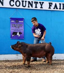 Grand Purebred Barrow Jackson Co Fair MN