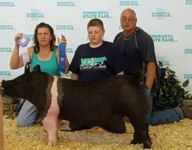 2016 Reserve Grand Champion Hampshire Gilt
