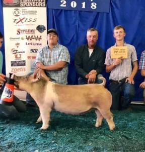 Multiple-time top 5 Breeding Gilt 2018 ISJS Circuit