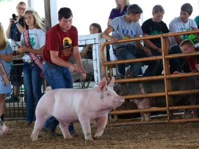 Reserve Champion Barrow Bremer Co IA