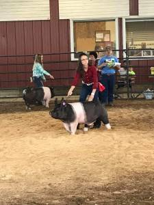 Reserve Champion Barrow Wahington Co Fair WI