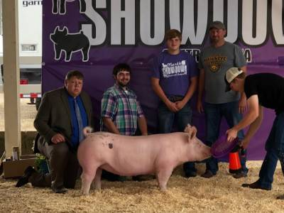 Reserve Champion Breeding Gilt North Central Iowa Showdown