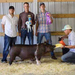 Reserve Champion Crossbred Barrow Preble Co OH