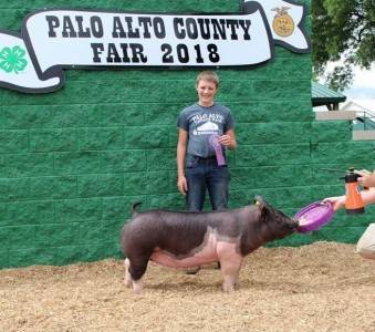 Reserve Grand Champ Commercial Gilt Palo Alto Co Fair
