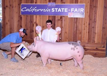 Reserve Grand Overall Breeding Gilt California State Fair Jr Show