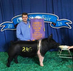 Reserve Hampshire Breeding Gilt OH State Fair Open Show