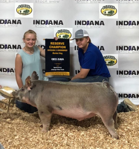 Reserve division indiana stock show