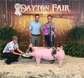 Supreme champion gilt Dayton Fair PA