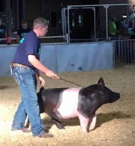 2016 Grand Champion Hampshire Barrow