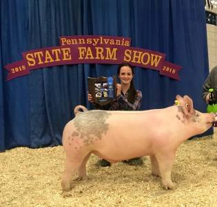 Division Champion Barrow 2018 Pennsylvania Farm Show