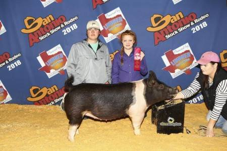 Second in Class - Sale Gilt 2018 San Antonio Breeding Gilt Show