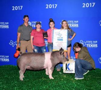 2017 Champion Commercial Gilt