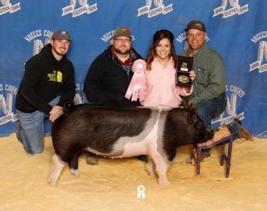 Reserve Champion Crossbred Gilt 2018 Nueces County, TX