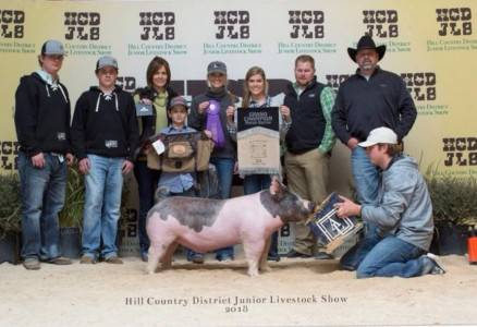 Supreme Champion Overall Barrow 2018 Hill Country District Show, TX
