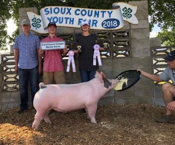 Reserve Grand Market Hog 2018 Sioux County Fair