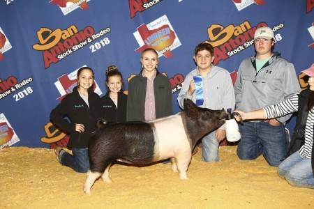 Class Winner - Sale Gilt 2018 San Antonio Breeding Gilt Show