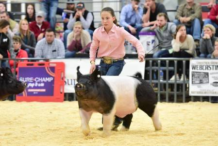 Premium Sale Cross Barrow 2018 National Western Stock Show
