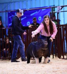 3rd Overall Division 5 Crossbred Gilt 2017 Arizona National Livestock Show