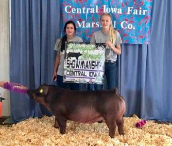 Reserve Grand Champion Breeding Gilt 2018 Marshall County Fair, IA