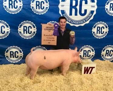 Grand Champion Gilt 2018 Randall County Jr Livestock Show