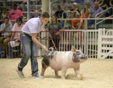 WPX Reserve Cross Gilt