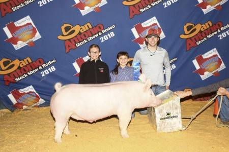Class Champion York Barrow 2018 San Antonio Stock Show