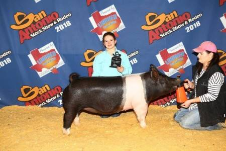 Reserve Champion Heavy Cross Gilt 2018 San Antonio Breeding Gilt Show