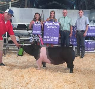 Adams Co Open & 4-H Grand Breeding Gilt