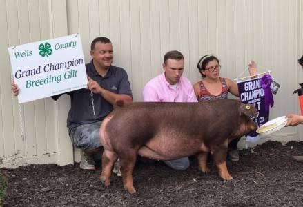 Well Co Grand Breeding Gilt