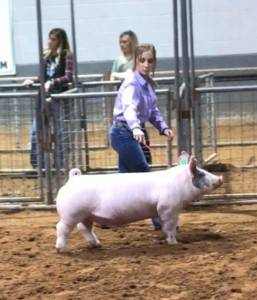 Reserve Grand Overall Barrow 2018 Nolan County, TX
