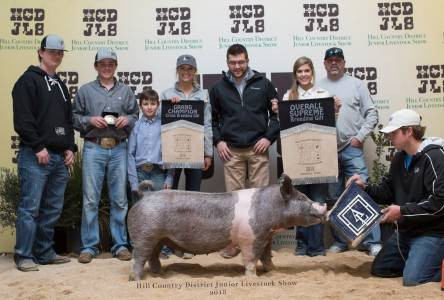 Supreme Overall Gilt 2018 Hill Country District Show, TX